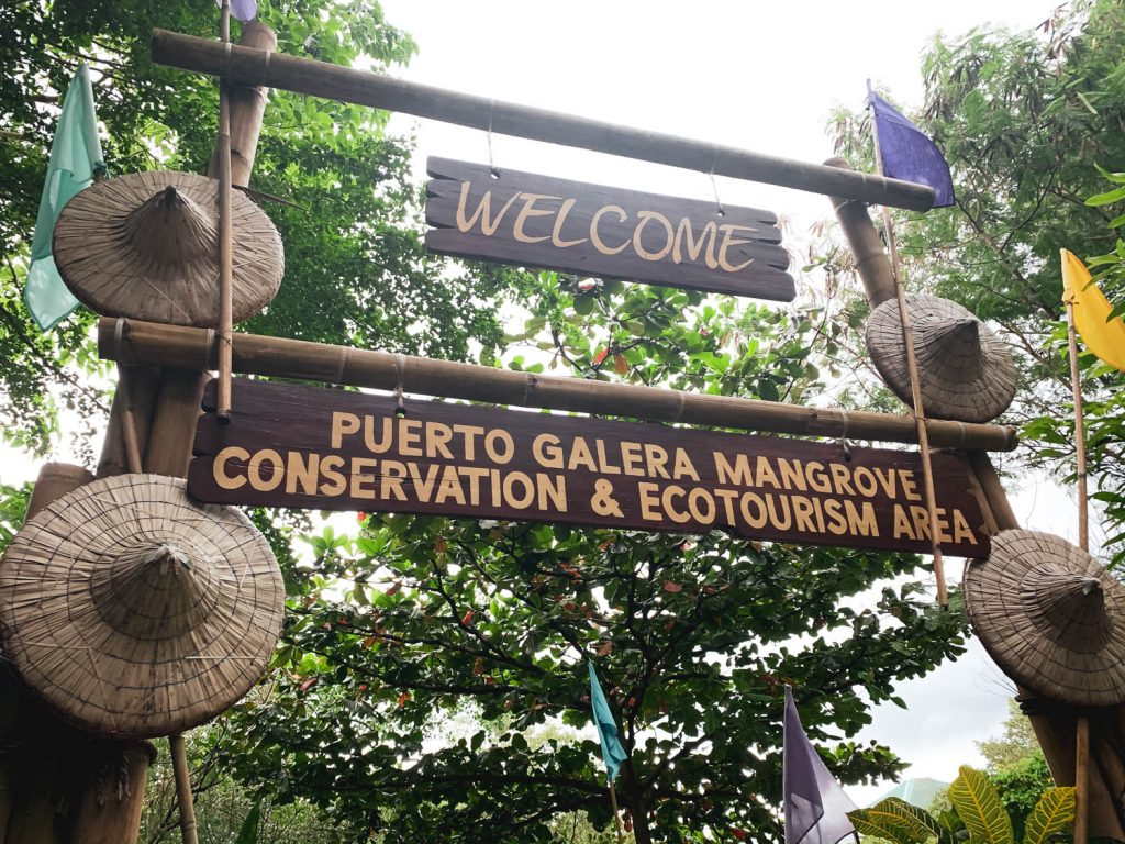 Puerto Galera Mangrove Conservation and Ecotourism Walk Travel Blog